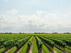 パリで大流行の【自然派ワイン】って何?他のワインと何が違うの!?
