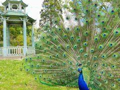 【パリ16区】自然と動物に癒される!バガテル公園  Parc de Bagatelle(5月中旬、薔薇が咲く前)