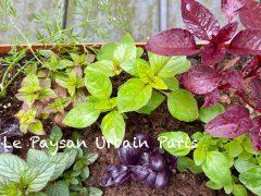 【パリBio生活】Le Paysan Urbain Paris 有機栽培のハーブや野菜の苗が生産者さんから直接買える!珍しい物もあり種類豊富!(食用)
